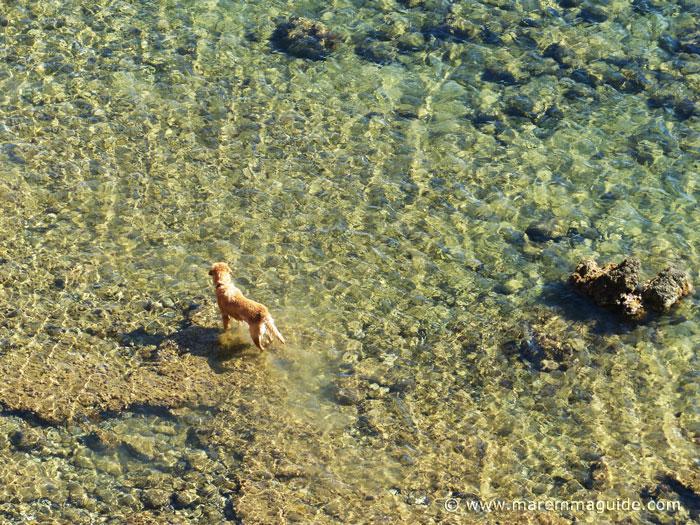 Dog beaches in Tuscany Italy