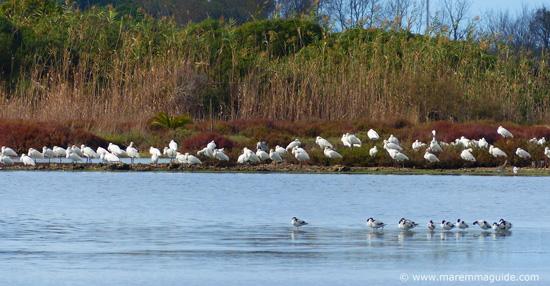 Riserva Naturale ed Oasi della Laguna di Orbetello Italy