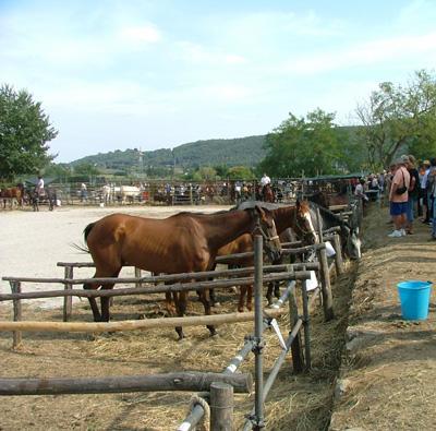 Fiera di Ghirlanda: livestock and horse pens
