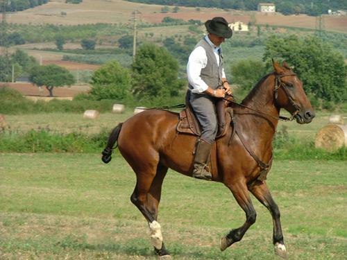 Fiera di Ghirlanda: Butteri Maremmani cowboy on Maremmano horse