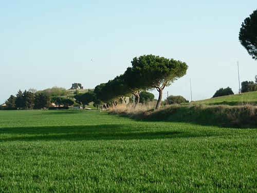 Isola Clodia at Badiola within the Diaccia Botrona Riserva Naturale in Maremma Tuscany Italy
