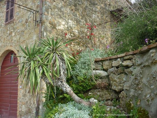 Tuscan garden in Leccia Maremma Toscana