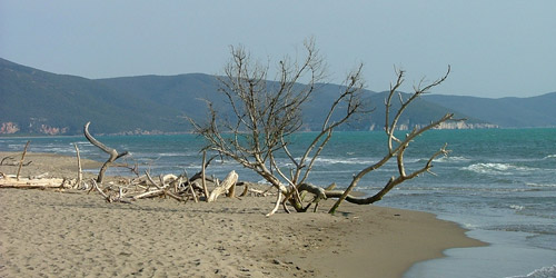 Marina di Alberese beach, Maremma