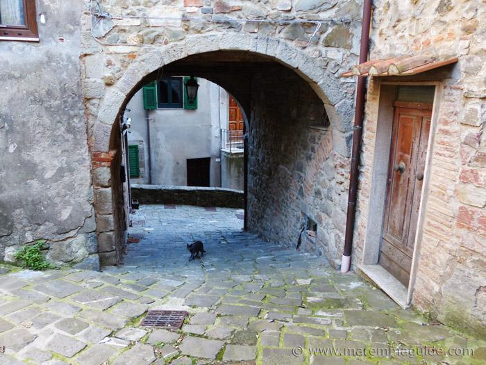Black cat walking up Via delle Mura in Montelaterone Italy.