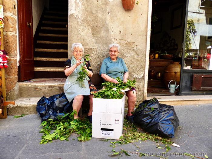 Grandmothers preparing the laurel leaves together for the Infiorata displays in Pitigliano.