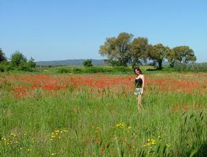 Tuscany spring: a Tuscany poppy field in Maremma