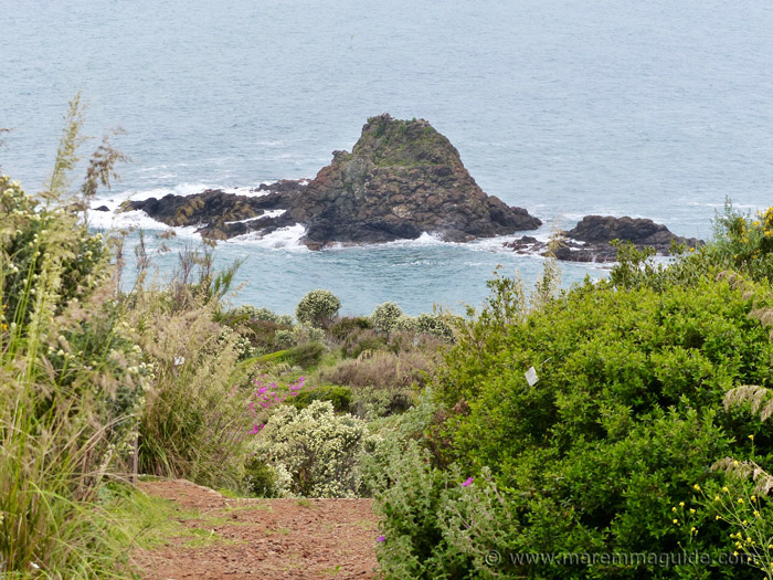 Scoglio Falcone and the path through the flowering macchia to the beach.