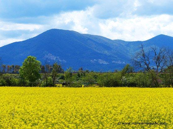 Spring flowers in Maremma Tuscany