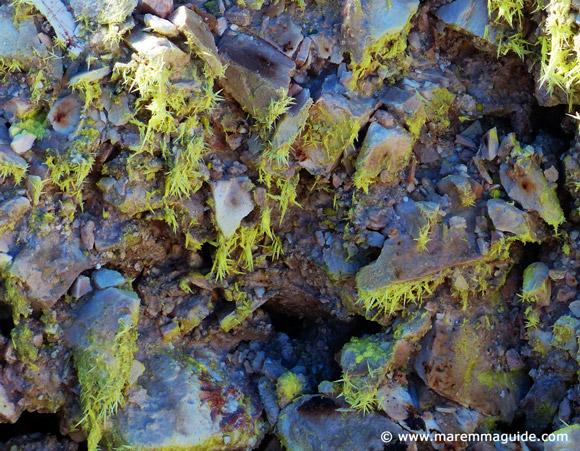 Sulphur crystals in the Parco Geotermico delle Biancane, Monterotondo Marittimo