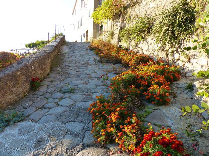 Wild marigolds growing in Tepolini Castel del Piano Maremma