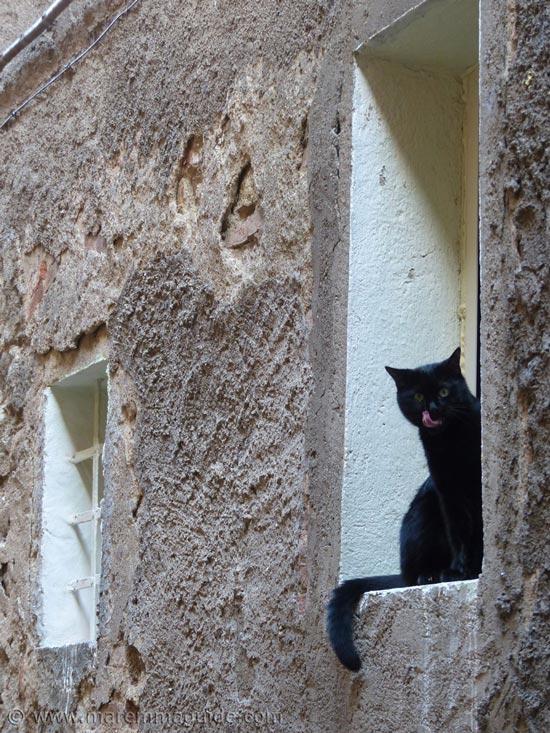 Tuscany cat in window, Roccastrada Maremma Italy.
