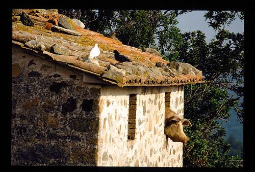 Tuscany farmhouse in Maremma Italy!