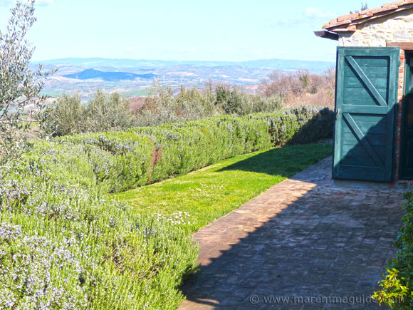 Property for sale in Scansano: view from the Maremma farmhouse backdoor.