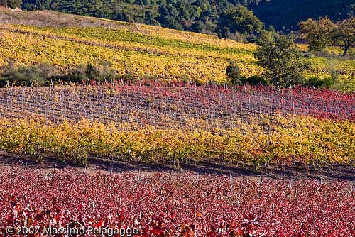 Tuscany wineries and vinyards in Maremma Italy