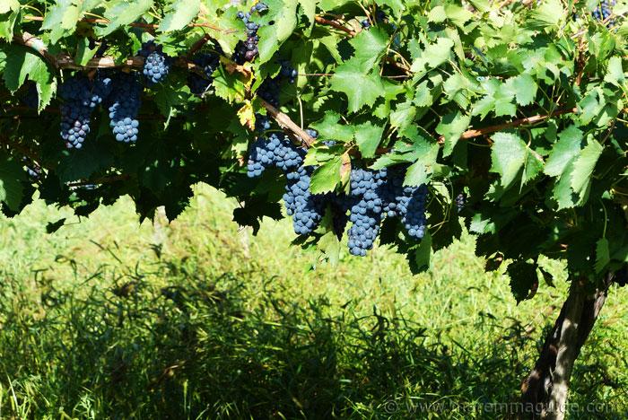Tuscany winery tour in Maremma.