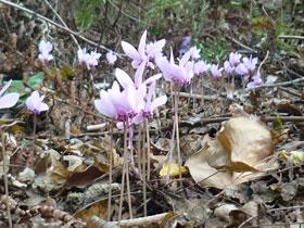 Vie Cave flora