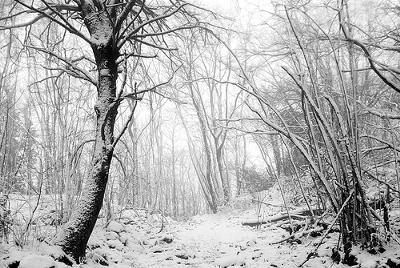 Sassoffortino woods