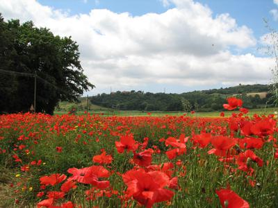 A wonderful poppy field just down from Massa Marittima. This is the Maremma region of Southern Tuscany at its best.