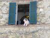A friendly dog checks us out in Pari.